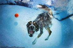 Photographer Captures Playful Dogs Underwater