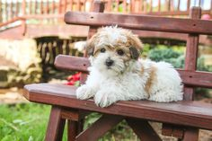 Morkie puppies: Lancaster Puppies has morkie puppies for sale. The Morkie dog is a playful, designer breed. Get a morkie puppy here. Morkie Puppies For Sale, Lancaster Puppies, Animals Dog, Mans Best Friend, Puppy Love, Handsome, Meet, Happy, Dogs