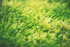 6 Miraculous Clever Tips: Artificial Garden Tips artificial grass decoration.Artificial Grass In Room artificial plants wall outdoor. Artificial Grass Cost, Artificial Garden Plants, Artificial Flowers, Indoor Plants, Fake Grass, Green Grass, Moss Grass, Cool Ideas, Plant Wall