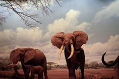 You know how I feel about the most beautiful animal in the world... Elephants <3