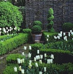 Boxwood hedge + white 'Triumphator' tulips + clipped tree standards + potted round boxwood + ornamental boxwood topiary