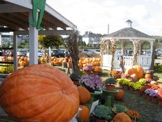 Pumpkinville Fall Fest at the Leesburg Animal Park .   Giant Hill Slides            • Hay Wagon Rides                  • Moon Bounces  • Kid's Corn Maze  • Spider Web Crawl  • Giant Pumpkin Bounce  • Pirate Play Ship   • Pony Rides                      • Pet & Feed LIVE Animals     • Free Apple & Cider Snack • Free Pie Pumpkin