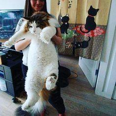 Just beautiful  Follow: @odonocuida . . #cat #catsofinstagram #cats #catstagram #instacat #catlover #catoftheday #ilovemycat #catlovers #catsagram #lovecats #instagramcats #cats_of_instagram #instacats #cutecat #catlife #ilovecats #catofinstagram #gato #gatos #cutecats #catsofinsta  #petstagram #instapets #cutepets #portugal