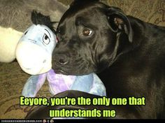 this is adorable because my dog has his own stuffed eeyore that he loves :)