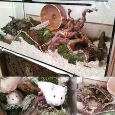 The Effective Pictures We Offer You About Rodents humor A quality picture can tell you many things. You can find the most beautiful pictures that can be presented to you about Rodents illustration in Habitat Du Hamster, Hamster Care, Hamster Stuff, Hamster Diys, Pet Stuff, Cool Hamster Cages, Gerbil Cages, Chinchilla, Mouse Cage