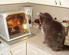 Bird-Watching Cat
