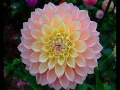 Beautiful Blooms 4 (Endless Love)