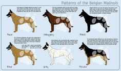 Pattern of #Belgian #Malinois.