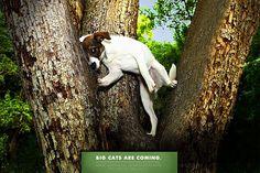 Funny Zoo Advertisements