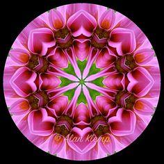 Alan Klemp Photography - Flower Mandala designs - Mandalas made with flowers Pink Dahlia