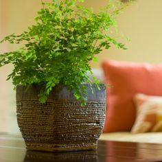 Cómo decorar la casa con plantas