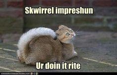 Cat & Skwirrel