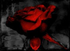 AC❤️ Color Splash, Red Roses, Painting, Colour, Dark, Beauty, Roses, Gardens, Color