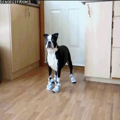 The best dog gifs of all time. Ever. Ever. Ever, Ever.