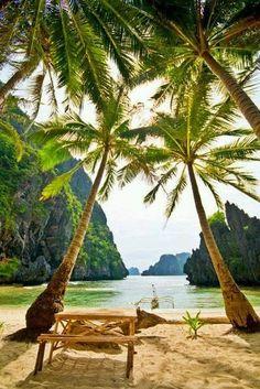 Coconut Palm, Maldives.