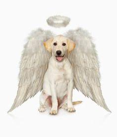 Dog Angels, Spirit Guides and Totems: God may send messages through dogs as angels, spirit guides, or totems.