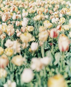 by Orie Ichihashi Ikko, Welcome Spring, The Great Gatsby, Flourish, Planting Flowers, Art Photography, Flora, Scenery, Landscape