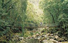Bridge in Minnamurra Rainforest, Wollongong