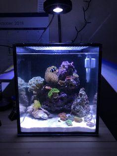 390 best nano reef tank images fish tanks aquarium ideas aquarium