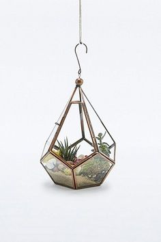 Tear Drop Terrarium