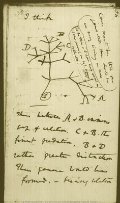 The Genealogical World of Phylogenetic Networks: Charles Darwin's unpublished tree sketches