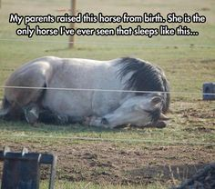 The Only Horse That Sleeps This Way Read more at