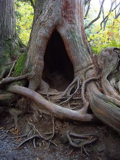 tree with amazing roots