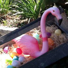 Retro flamingo on eggs at Nest Vintage, Johnson City, TX