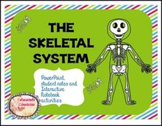 """FREE SCIENCE LESSON - """"Skeletal System PowerPoint, Notes and Interactive Notebook Activities FREEBIE"""" - Go to The Best of Teacher Entrepreneurs for this and hundreds of free lessons. 3rd - 5th Grade  #FreeLesson   #Science  http://www.thebestofteacherentrepreneurs.org/2016/03/free-science-lesson-skeletal-system.html"""