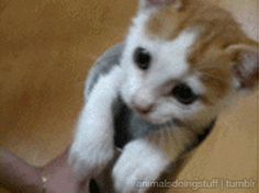 Image result for cute animal gifs