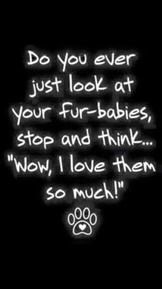 Do you ever just look at your fur-babies...