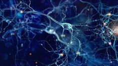 "How Nerve Cells Stop Others ""Listening In"" 