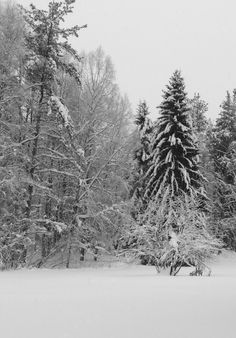 Jouluinen maisema! Snow, Outdoor, Outdoors, Outdoor Games, The Great Outdoors, Eyes, Let It Snow