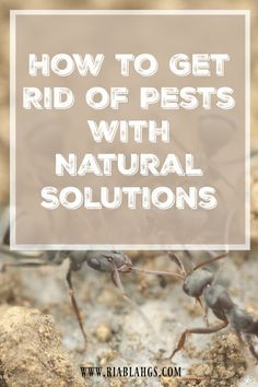 It's My Party: How to Get Rid of Pests with Natural Solutions