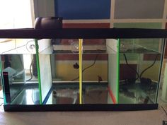 1000 images about fish tank on pinterest fish tanks for Diy fish tank divider