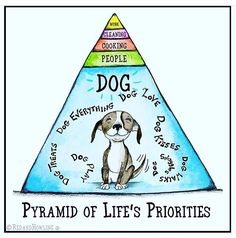 Thank you @breezeydog for sharing this. Thankfully my pyramid is upside down. #priorities #dogs #pyramid #work #dogtrainerslife #lucky #nosundayblues #london #myoffice
