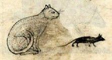 Medieval Bestiary : Cat Gallery