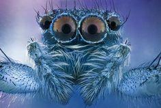 Cookie Monster #invertebrate #spider #arachnid