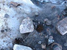 Plantas que resucitan después de 400 años Biólogos de la Universidad de Alberta dirigidos por Catherine La Farge, han verificado que briofitas (plantas terrestres no vasculares) cubiertos por el hielo desde hace más de 400 años, son capaces de volver a crecer cuando el hielo desaparece por el derretimiento de los glaciares.
