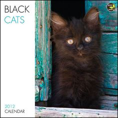 I LOVE black cats!