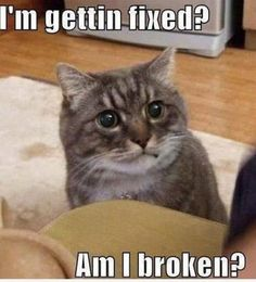 today-funny-cats-images-2209-06