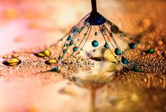 Amazing Macro Photography Reveals The Magical World Of Water Droplets