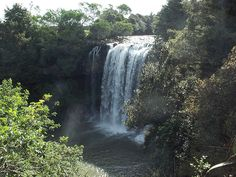 Rainbow Falls near Kerikeri, New Zealand Rainbow Falls, Island Nations, South Island, Small Island, Pacific Ocean, Fiji, New Zealand, Waterfall, Travel