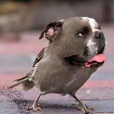Dogs + Birds = Dirds. See the rest here: http://www.i-heart-pets.com/dogs-birds-dirds/ #dogs #birds #lol #cute #pets