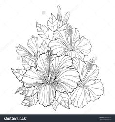 Vector bouquet with Chinese Hibiscus or Hibiscus rosa-sinensis. Flower, bud and leaves isolated. Round composition with Hibiscus. Floral elements in contour style for summer design and coloring book.