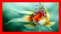 Мировая рыбалка !!Рыбалка шок !!Вот и рыбка золотая!!!