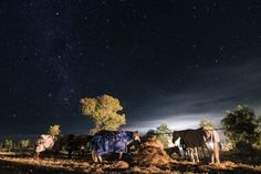 Resting under the stars Photo by Andrea Pellegrini � National Geographic Your Shot