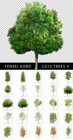Árboles de Alta calidad en PSD con fondo transparente (Ultra High Quality PSD Trees with transparent background) | Recursos 2D.com