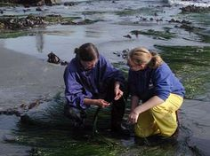 OIMB - The Oregon Institute of Marine Biology: Summer Term