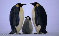 Penquin family